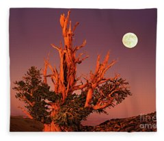 Full Moon Behind Ancient Bristlecone Pine White Mountains California Fleece Blanket