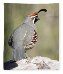 Gambel's Quail Fleece Blanket