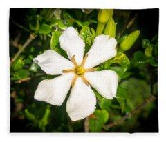 Gardenia In The Morning Sun Fleece Blanket