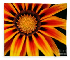 Gazania L Fleece Blanket