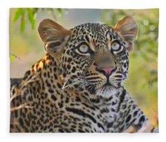 Gazing Leopard Fleece Blanket