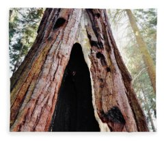 Giant Forest Giant Sequoia Fleece Blanket