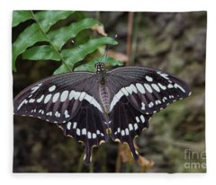 Giant Swallowtail Fleece Blanket