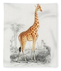 Giraffe - Giraffa Camelopardalis Fleece Blanket