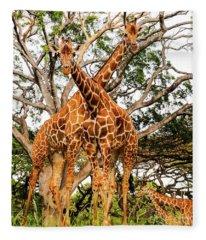 Giraffe's Looking Fleece Blanket