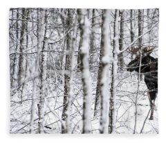 Glimpse Of Bull Moose Fleece Blanket
