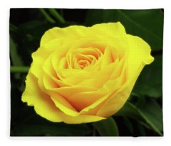 Glorious Yellow Rose Fleece Blanket