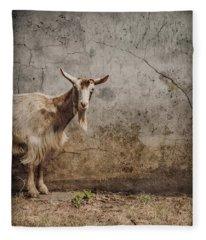 London, England - Goat Fleece Blanket