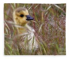 Gosling In The Meadow Fleece Blanket