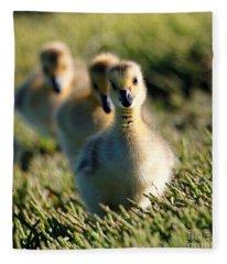 Gosling March Fleece Blanket