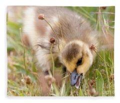 Gosling Nibble Fleece Blanket