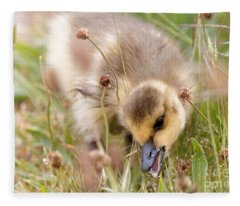 Gosling Nibble Fleece Blanket