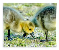 Goslings Snacking Fleece Blanket