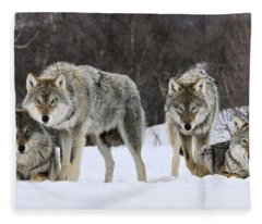 Gray Wolves Norway Fleece Blanket