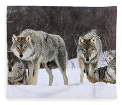 Gray Wolves Norway Fleece Blanket