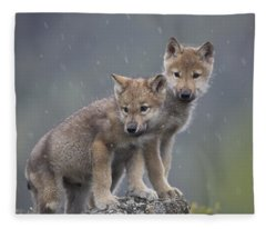 Gray Wolf Canis Lupus Pups In Light Fleece Blanket