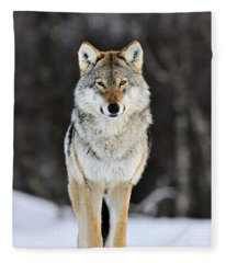 Gray Wolf In The Snow Fleece Blanket