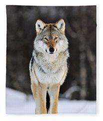 Gray Wolf In The Snow Fleece Blanket