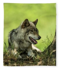Gray Wolf In Shade Fleece Blanket