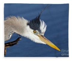 Great Blue Heron - Good Scratch Fleece Blanket