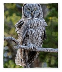 Great Grey Owl Yellowstone Fleece Blanket