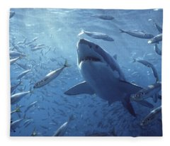 Great White Shark Carcharodon Fleece Blanket