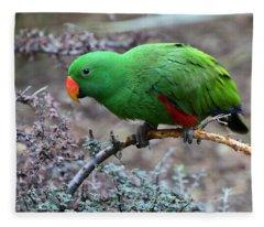 Green Male Eclectus Parrot Fleece Blanket
