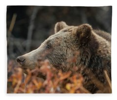 Grizzly Bear Portrait In Fall Fleece Blanket