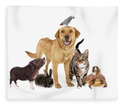 Group Of Domestic Pets Together On White Fleece Blanket