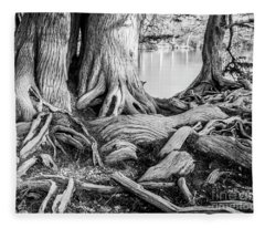 Guadalupe Bald Cypress In Black And White Fleece Blanket