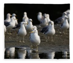 Gulls At The Beach Fleece Blanket