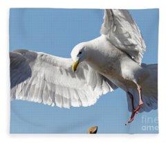 Gulls Dilemma Fleece Blanket