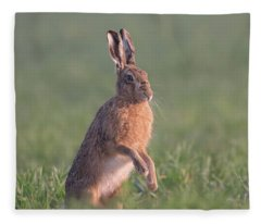 Hare At Dawn Fleece Blanket