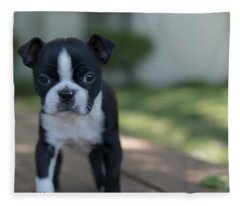 Harley As A Puppy Fleece Blanket