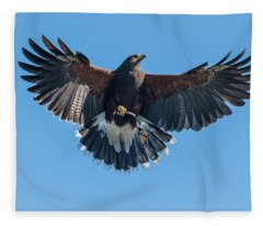 Harris Hawk At Ramona Grasslands Fleece Blanket