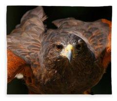Harris Hawk - Getting Ready Fleece Blanket