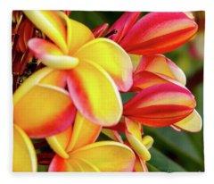 Hawaii Plumeria Flowers In Bloom Fleece Blanket