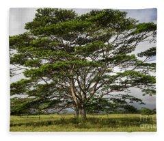 Hawaiian Moluccan Albizia Tree Fleece Blanket