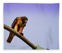 Hawk Eating Fleece Blanket