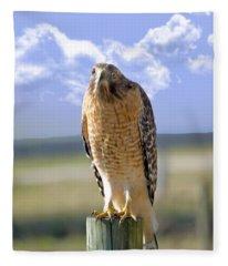 Hawk On A Fencepost Fleece Blanket
