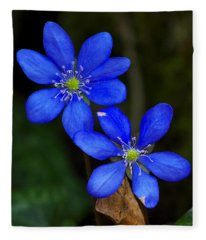 Hepatica Nobilis Fleece Blanket