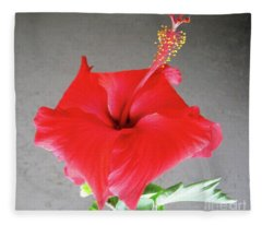 Hibiscus #1 Fleece Blanket