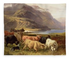 Highland Cattle With A Collie Fleece Blanket