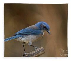 Hill Country Scrub Jay Fleece Blanket