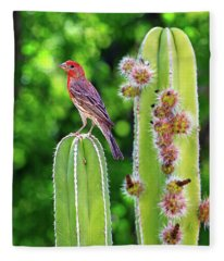 House Finch On Blooming Cactus Fleece Blanket