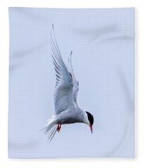 Hovering Arctic Tern Fleece Blanket