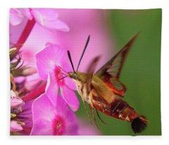 Hummingbird Moth Feeding 1 Fleece Blanket