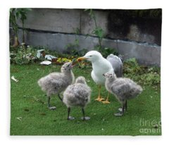 Hungry Baby Seagulls Fleece Blanket