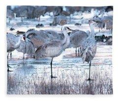 Icy Stroll Fleece Blanket