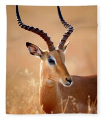 Impala Male Portrait Fleece Blanket
